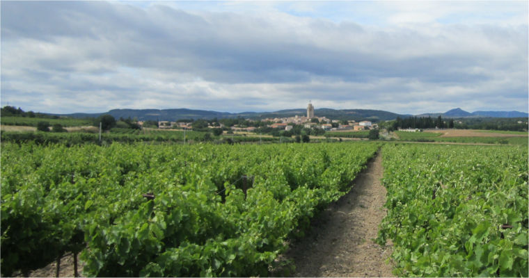 vignes et clocher